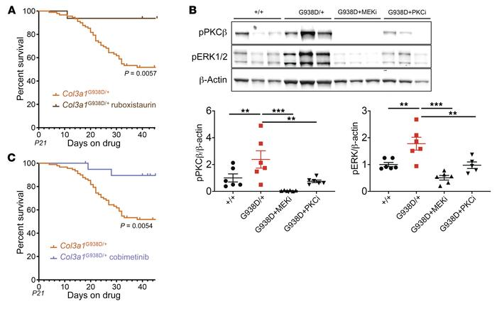 Inhibition of excessive PKCβ or ERK signaling prevents death due to aort...