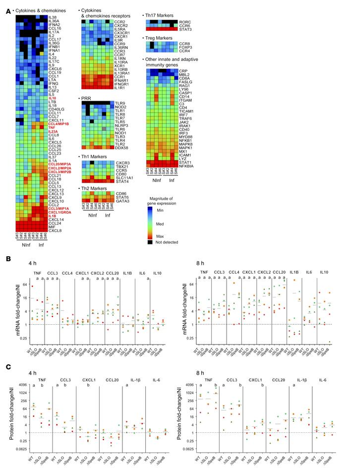 Host cytokine responses to GAS infection. (A) Heatmap of the results fro...