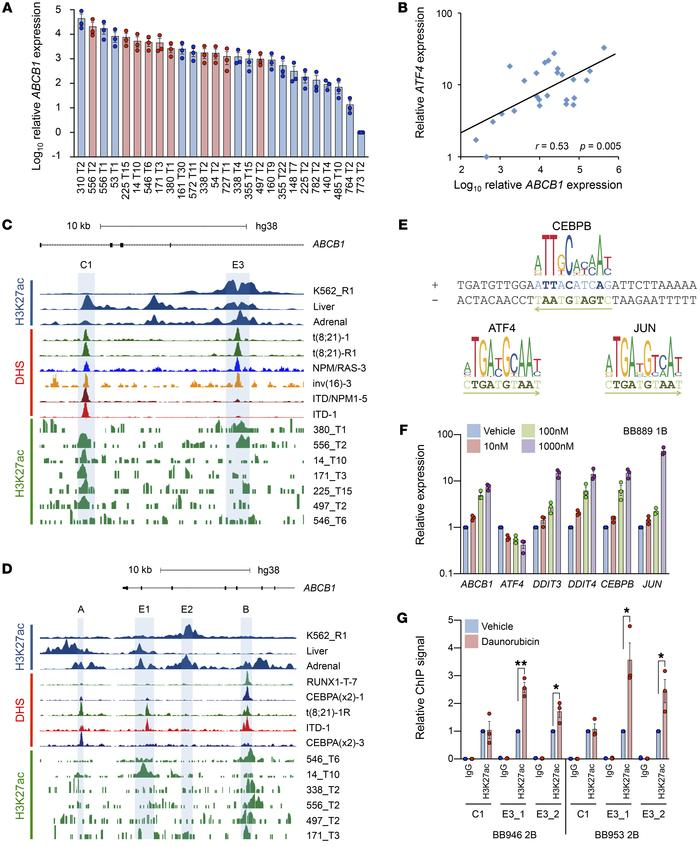 Daunorubicin activates a stress-responsive ABCB1 enhancer in primary AML...