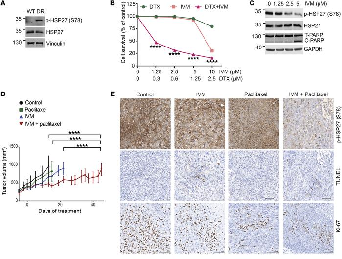 Ivermectin reverses taxane resistance in prostate cancer cells. (A) Immu...