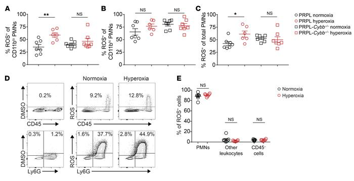 Relief of tumor hypoxia increases NOX2-dependent ROS production by tumor...