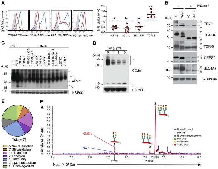 Impaired glycosylation of immune proteins and CDT pattern in XMEN diseas...