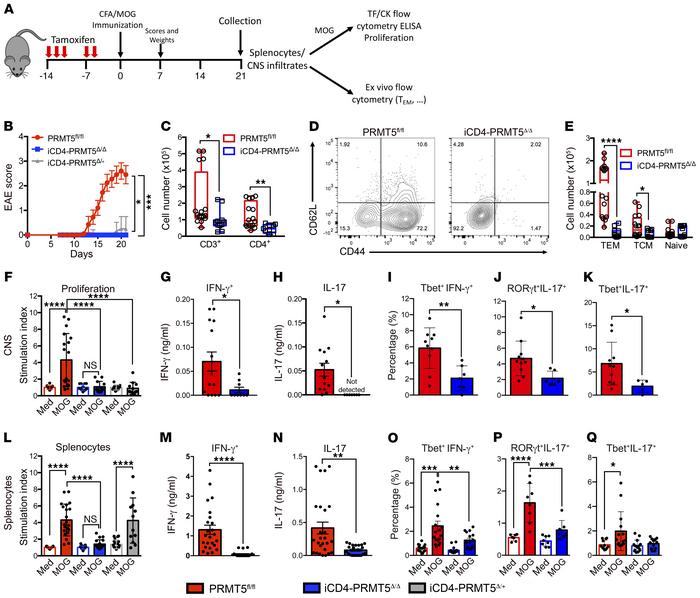 Th cell–specific Prmt5 deficiency prevents induction of EAE autoimmunity...