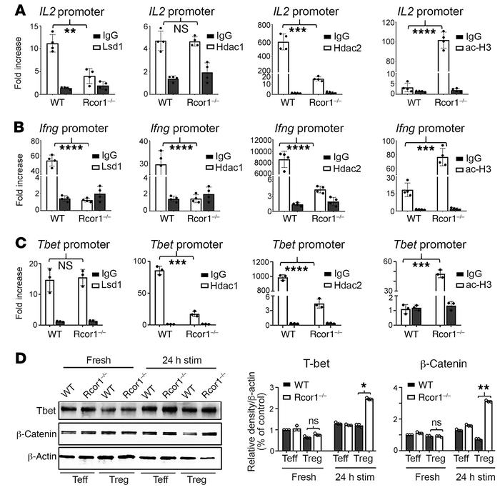 Rcor1 deletion promotes Treg expression of IL-2, IFN-γ, and T-bet. ChIP ...