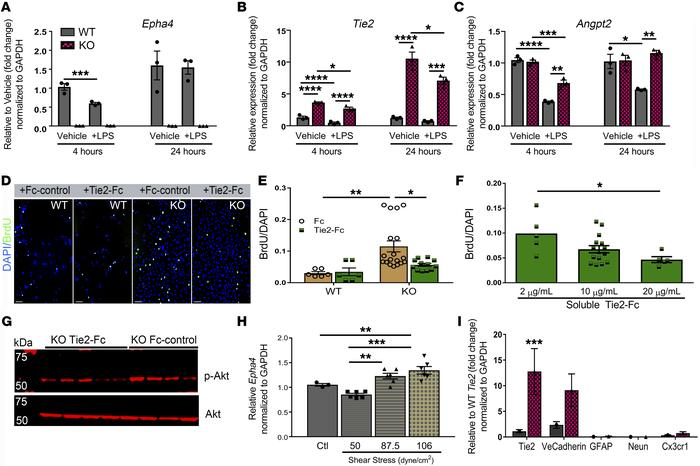 EphA4 suppresses Tie2/p-Akt expression to limit brain-derived EC prolife...