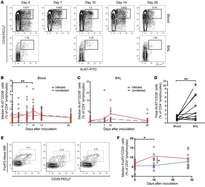 Enrichment of activated and regulatory CD4+ T cells in the lower airway ...