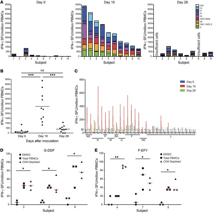 Immunodominant CD4+ T cell epitopes are found in the surface F and G pro...