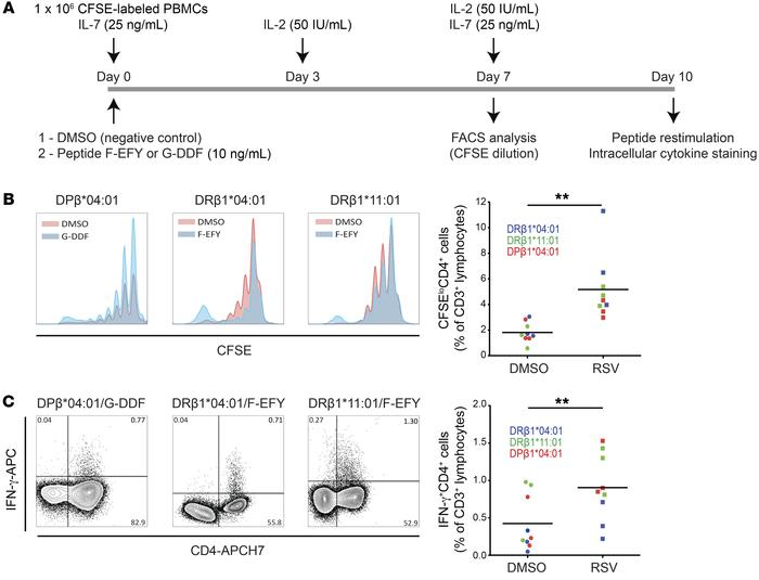 Immunodominant epitopes from F and G proteins induce proliferation and c...