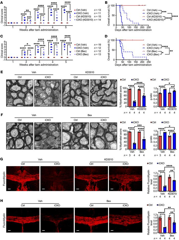 PPARβ and RXR agonists alleviate Qki deficiency–induced demyelination. (...