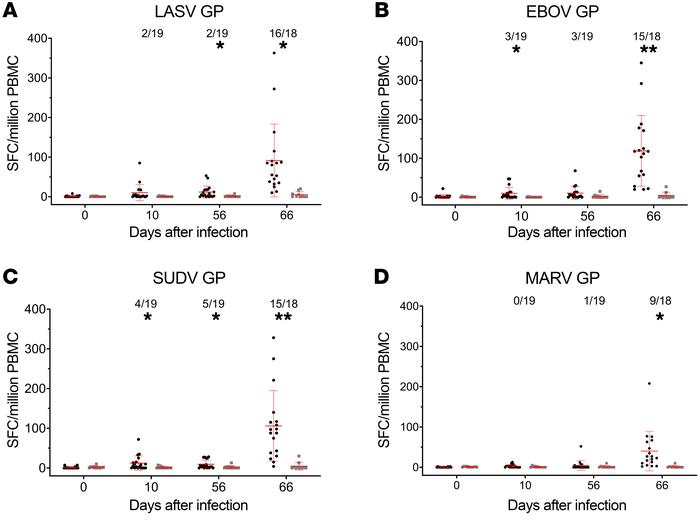 Filovirus and LASV GP–specific IFNG ELISPOT responses in macaques immuni...