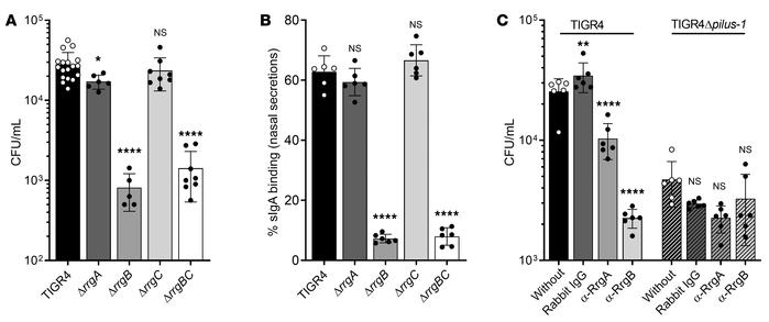 Pilus-1 component RrgB mediates pneumococcal adherence and binding to sI...