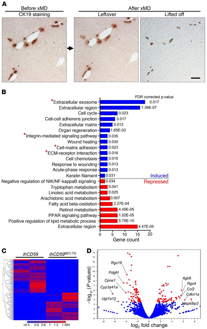 xMD and RNA-Seq identify ITGβ6 as one of the most upregulated genes in B...