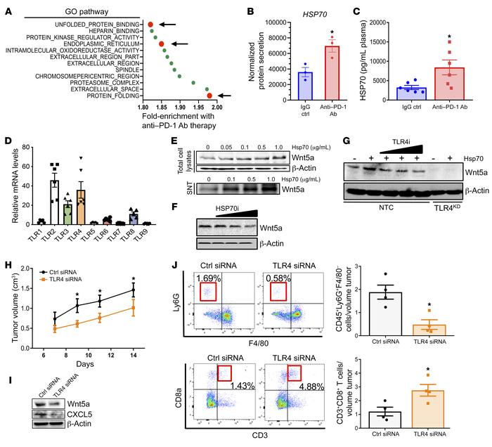 HSP70-TLR4 induces Wnt5a expression in response to anti–PD-1 Ab immunoth...