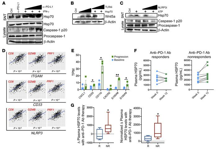 The PD-L1/NLRP3/HSP70 PMN-MDSC adaptive recruitment pathway in human mel...