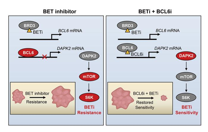 BCL6 confers KRAS-mutant non-small-cell lung cancer resistance to BET inhibitors