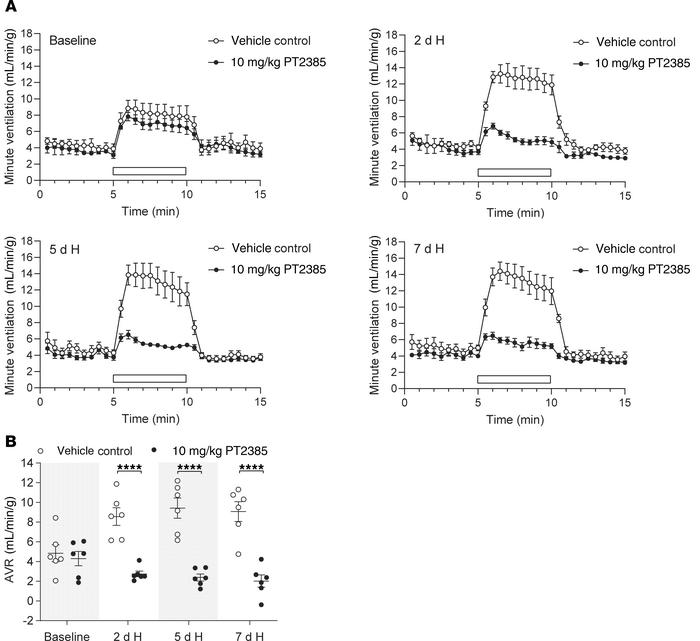 PT2385 ablates ventilatory acclimatization to hypoxia in WT male mice. (...