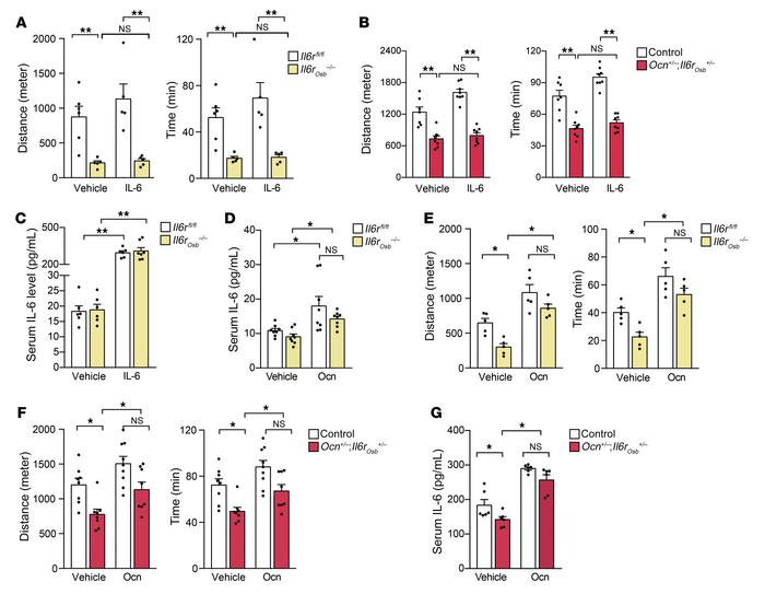 IL-6 signaling in osteoblasts is needed to enhance exercise capacity dur...
