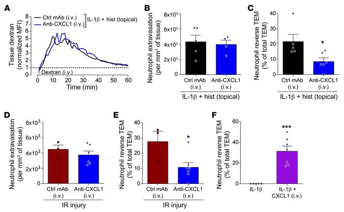 Systemic CXCL1 promotes neutrophil reverse TEM. Cremaster muscles of Lys...