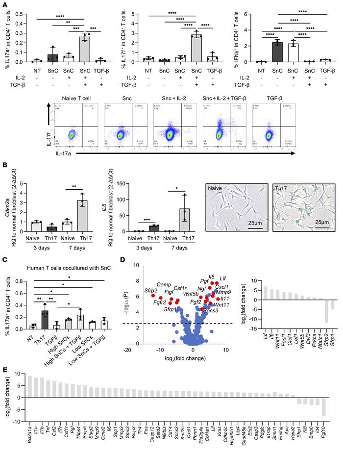 Inflammation-induced senescence in fibroblasts cultured with Th17 cells ...