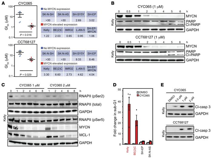 CDK9 and CDK2 are selectively essential for MYCN-amplified NB. (A) GI50 ...