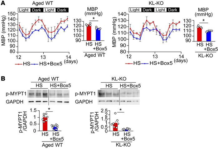 Treatment with Wnt5a antagonist Box5 suppresses salt-induced hypertensio...