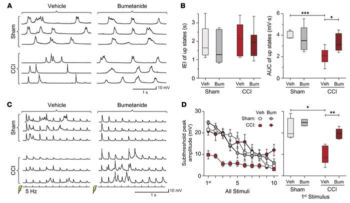 Reducing neuronal edema increases network excitability after CCI. (A) Re...