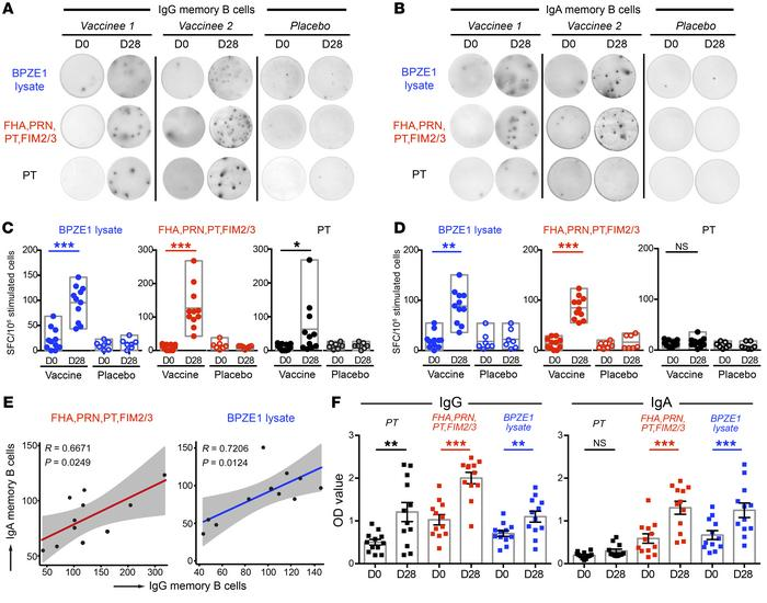 BPZE1 vaccination induced strong memory B cell responses. (A and B) IgG ...
