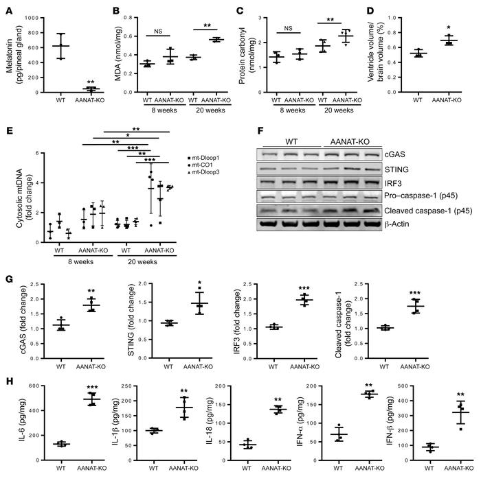 Melatonin deficiency–induced mtDNA release mediated neuroinflammation. (...