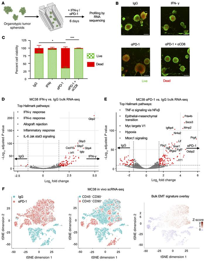 Bulk RNA-Seq of MDOTS reveals a unique transcriptomic response to immune...