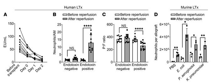 Persistence of endotoxin in human and murine donor lungs is associated w...