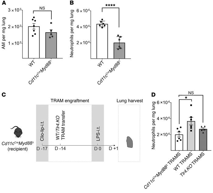 TLR4-MyD88 signaling directs TRAM-mediated neutrophil recruitment. (A) F...