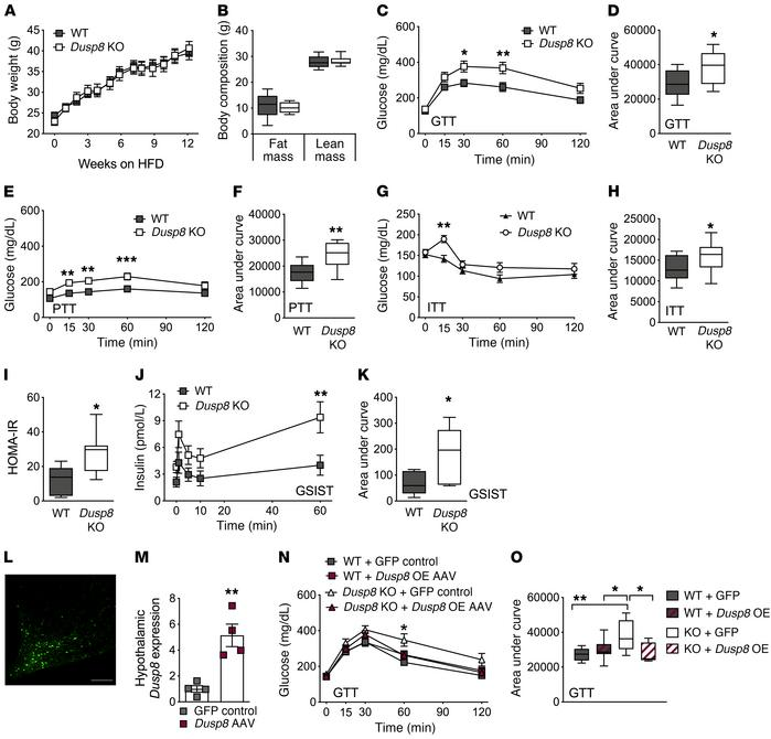 HFD-induced glucose intolerance in global male Dusp8-KO mice is reversed...