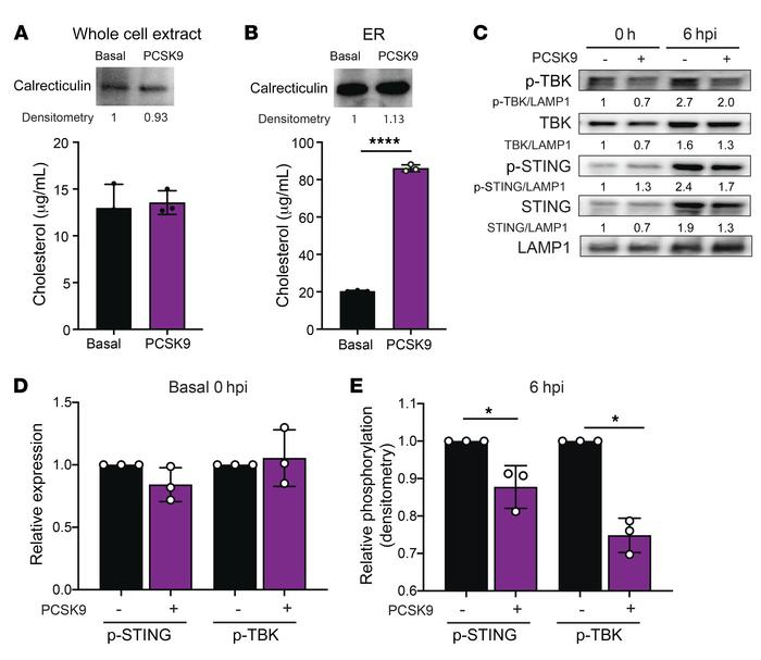 PCSK9 suppresses STING-dependent induction of type-I IFN during DENV inf...
