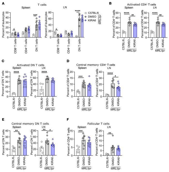 IRE1α inhibition affects T cell activation. MRL/lpr mice were treated wi...