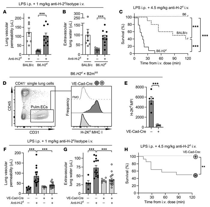 Removal of MHC I from endothelium is protective in anti–MHC I–mediated l...