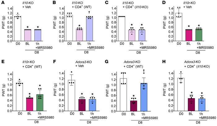 Activation of A3AR expressed on CD4+ T cells is required in the anti-all...