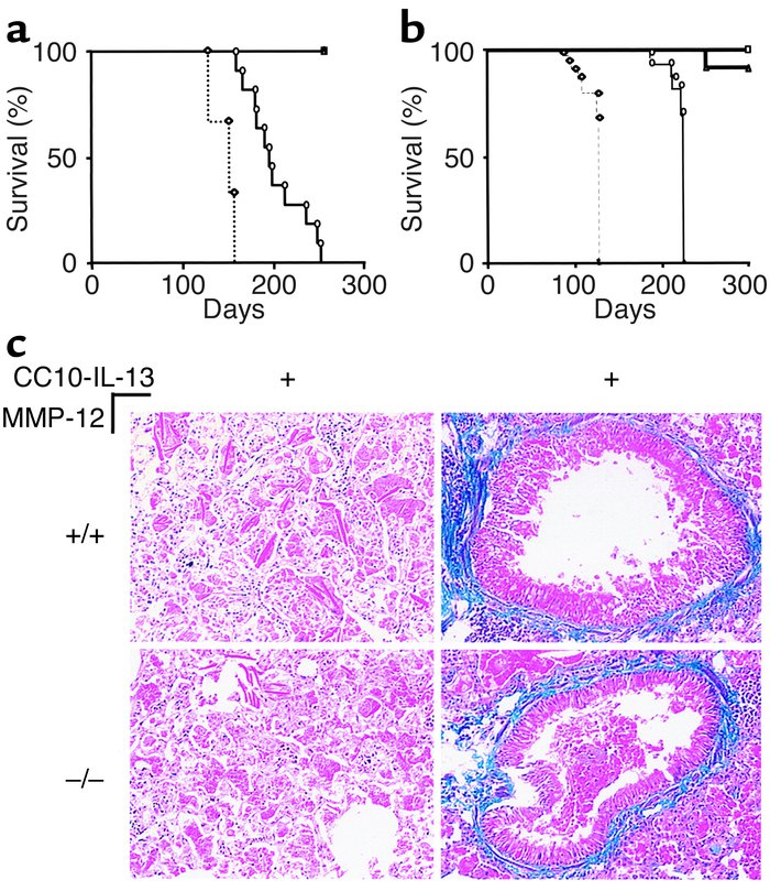 Survival and terminal pathology of CC10-IL-13 mice and littermate contro...