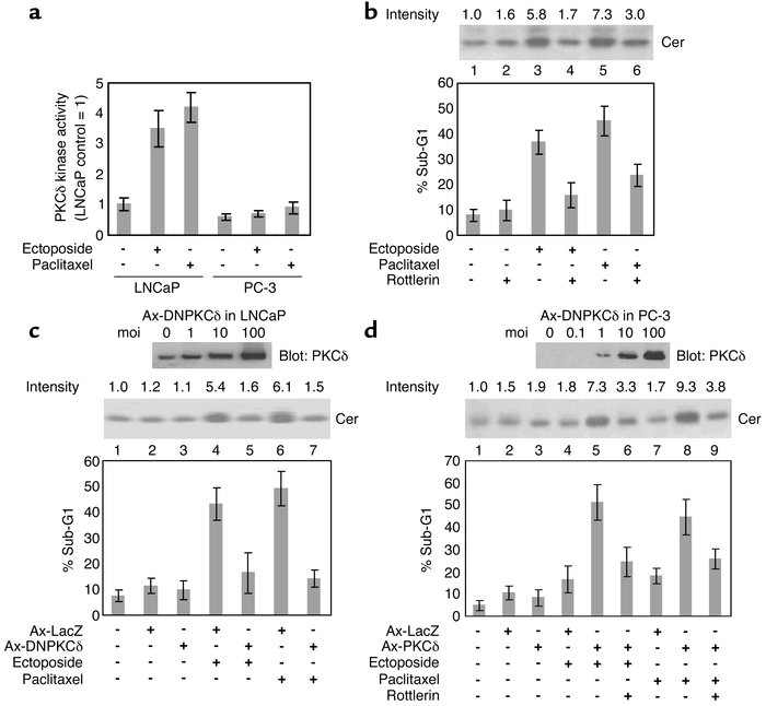 PKCδ activity is required for Cer formation and apoptotic cell death in ...