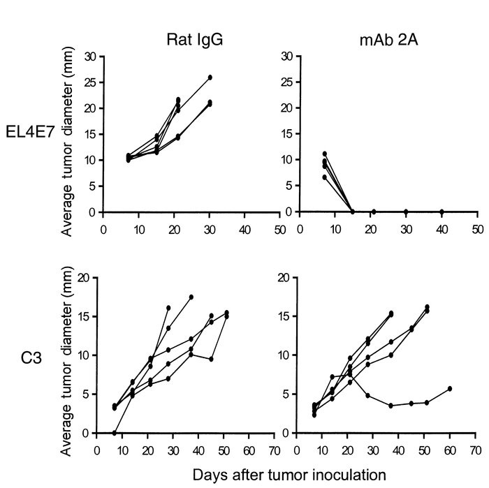 Treatment of established EL4E7 and C3 tumors with mAb 2A. Mice were inje...