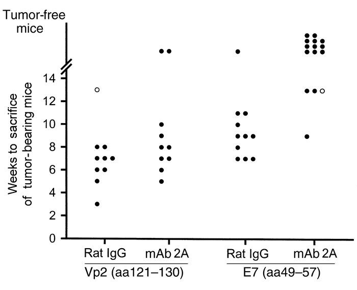 Regression of established C3 tumors after treatment with the E7 peptide ...