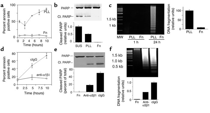 Fibronectin and integrin α5β1 support endothelial cell survival. (a–c) H...