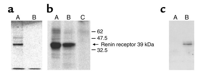In vitro transcription/translation of N14F/FLAG protein and coprecipitat...