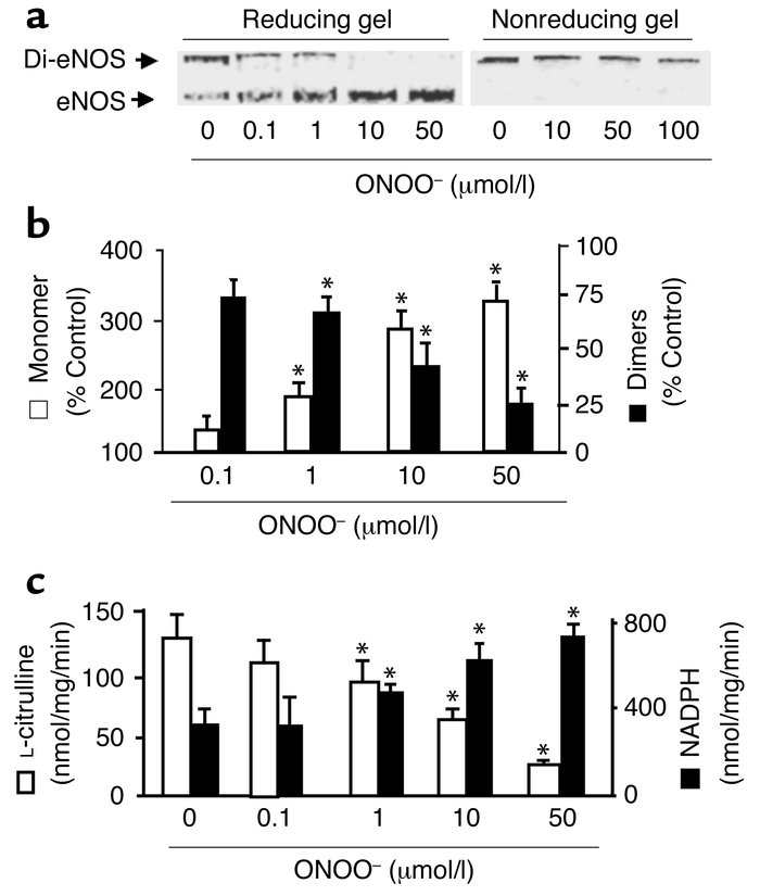 ONOO– dissociates SDS-resistant dimers and alters recombinant eNOS activ...