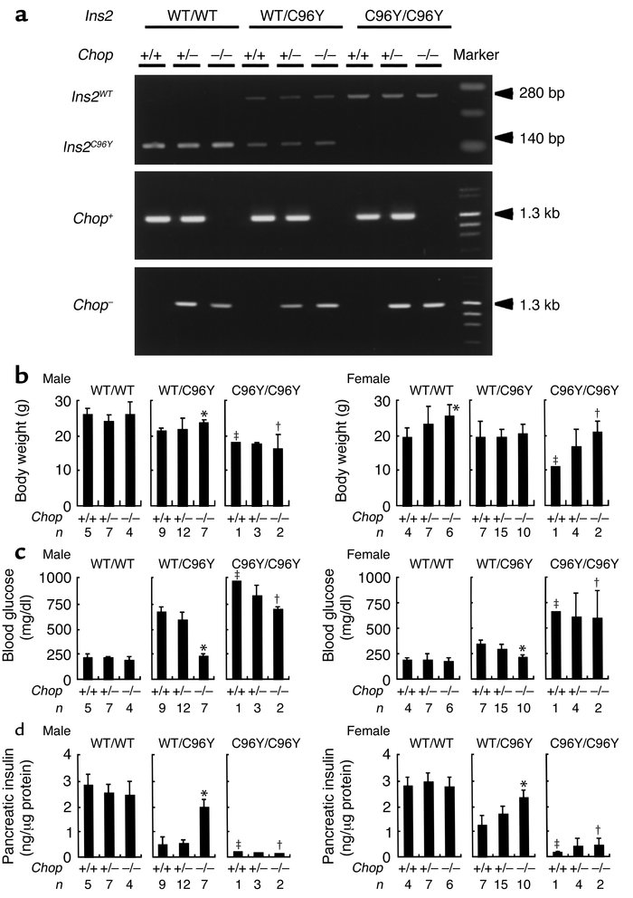 Characteristics of the double-mutant mice with Ins2 mutation and Chop di...