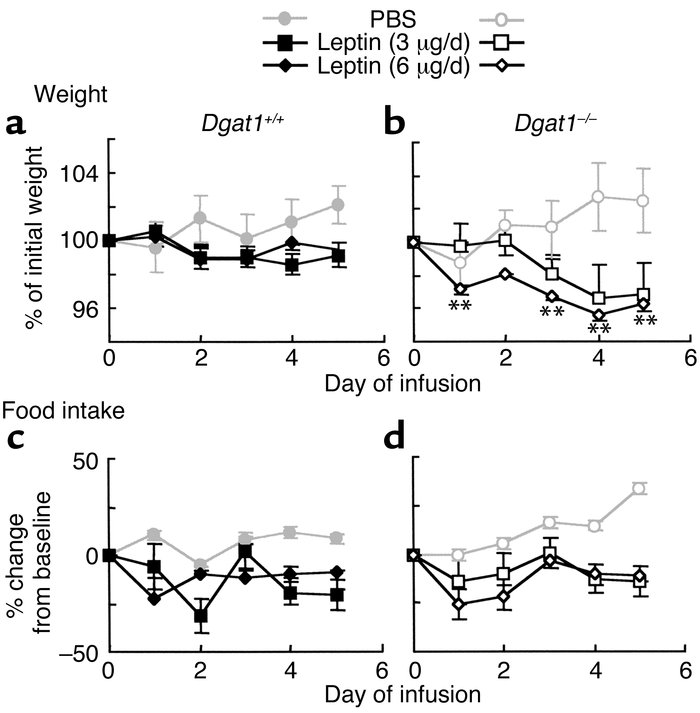 Increased weight loss in response to leptin infusion in Dgat1–/– mice. (...