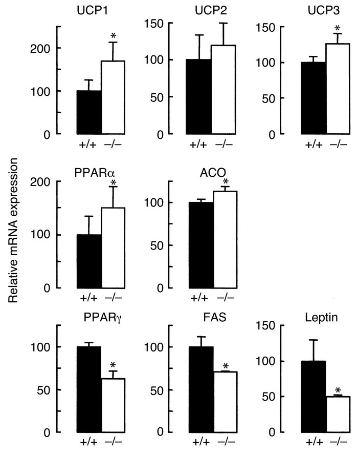 Expression of leptin-regulated genes in Dgat1–/– mice. The expression of...