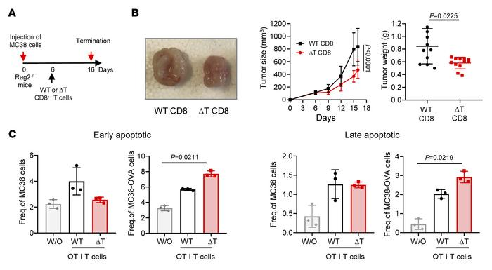 Tumor reduction after therapeutic PTPN2-deficient CD8+ T cell transfer. ...
