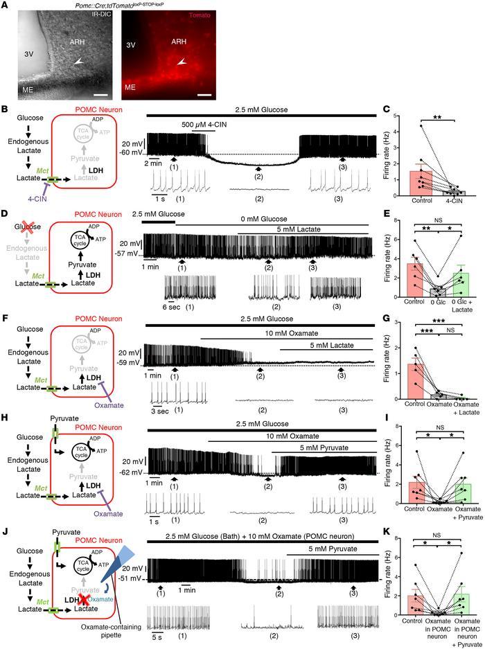 内源性生产乳酸乳酸穴位神经元活性。(a)在...