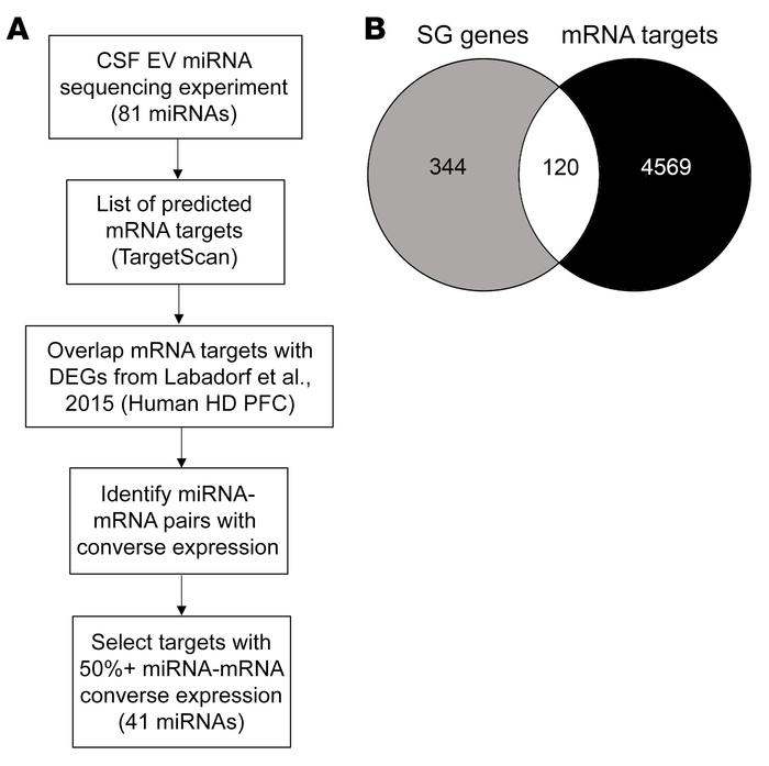 EV miRNAs in the CSF of patients with HD target SG-related mRNAs that ar...