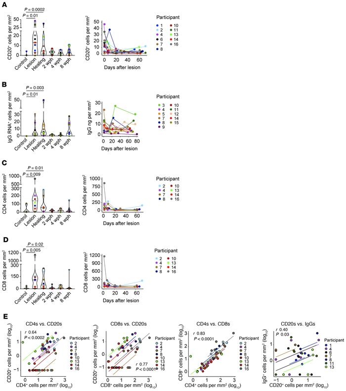 Migration kinetics of B and T cells into genital skin during HSV-2 react...